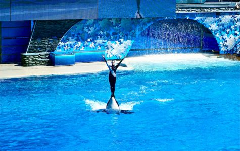 Seaworld's Response: The California Orca Protection Act