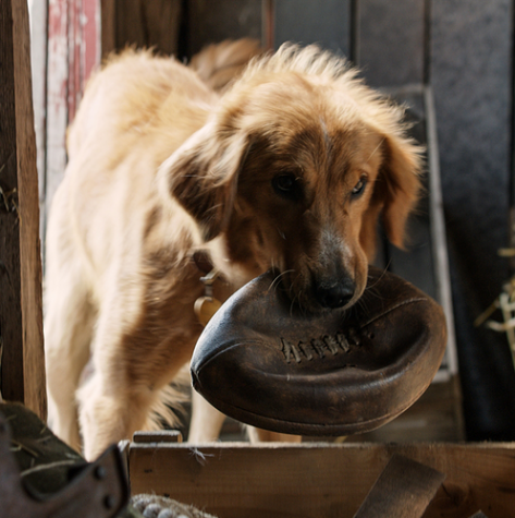 One Week Left in Theaters: A Dog's Purpose is Worth It