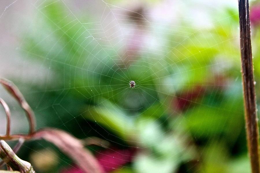 The+Itsy+Bitsy+Spider