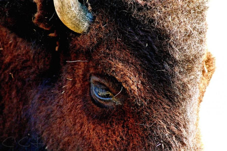 Thats+Bull