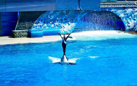 Seaworld's Response: The California Orca Protection Act