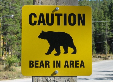 Woman Survives Bear Attack