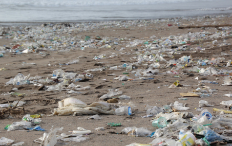 Plastics Are Choking Our Oceans to Death