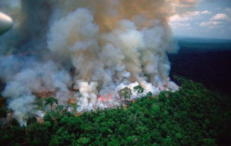 Fires Continue to Rage in the Amazon