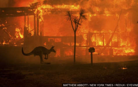 Australia Wildfires: What Happened and How to Help